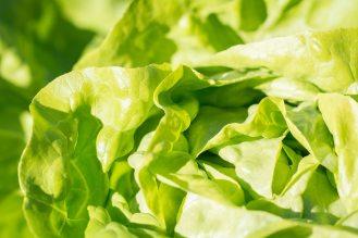 agriculture-close-up-crisp-208456
